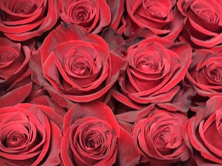 Pétalos de rosa naturales